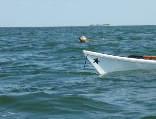 Shark Attack vor Göteborg